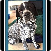 Adopt A Pet :: Oscar - Rancho Cucamonga, CA
