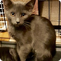Adopt A Pet :: Annie - Cerritos, CA