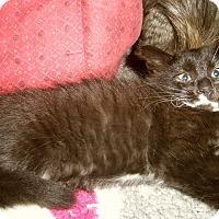 Adopt A Pet :: SERINITY - Medford, WI