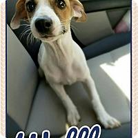 Adopt A Pet :: Waffles - Edwards AFB, CA