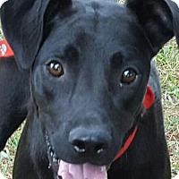 Adopt A Pet :: Ebony - Albany, NY