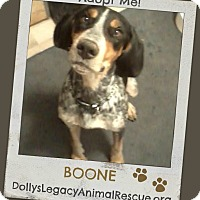 Adopt A Pet :: BOONE - Lincoln, NE