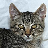 Adopt A Pet :: Steve L - Sacramento, CA