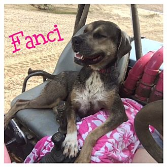 Hound (Unknown Type) Mix Dog for adoption in St. Francisville, Louisiana - Fanci Pants