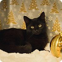 Adopt A Pet :: Hershey - Brockton, MA