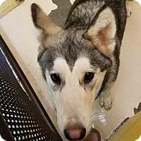 Adopt A Pet :: Voli - Douglasville, GA