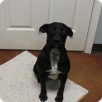 Adopt A Pet :: Wallace - Groton, MA