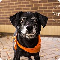 Adopt A Pet :: Heart - Mooresville, NC