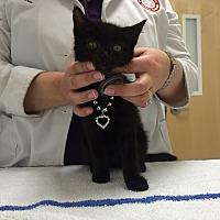 Adopt A Pet :: Luke - Hallandale, FL