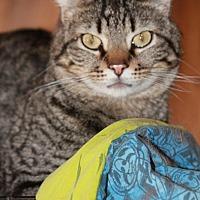 Adopt A Pet :: Samson - Rawlins, WY