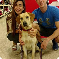 Adopt A Pet :: Zack - Darien, GA