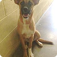 Adopt A Pet :: Kira! - Sacramento, CA