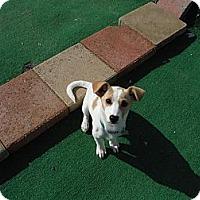 Adopt A Pet :: Luke - Atascadero, CA