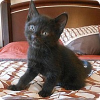 Adopt A Pet :: Thunder - Reston, VA