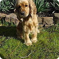 Adopt A Pet :: Watson - Sugarland, TX
