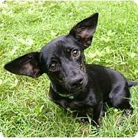 Adopt A Pet :: Dana - Mocksville, NC