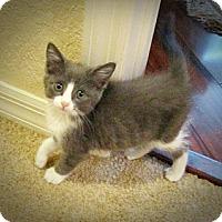 Adopt A Pet :: Marie - Seminole, FL