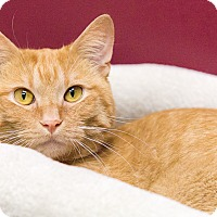 Adopt A Pet :: Carrot Top - Chicago, IL