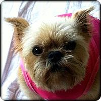 Adopt A Pet :: KAYCEE - ADOPTION PENDING - Seymour, MO