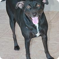 Adopt A Pet :: Debra - Buckeye, AZ