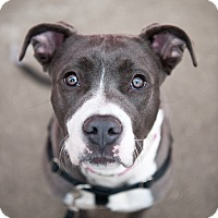 Adopt A Pet :: North - Villa Park, IL