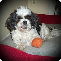 Adopt A Pet :: Finn - Youngstown, OH