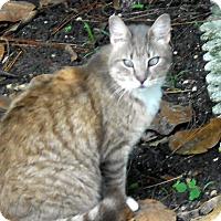 Adopt A Pet :: Sabrina - Bonita Springs, FL