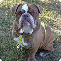 Adopt A Pet :: Hermes - Santa Ana, CA