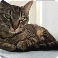 Adopt A Pet :: DW - Diamond Springs, CA