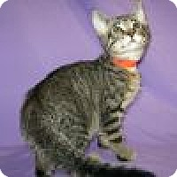 Adopt A Pet :: Kirby - Powell, OH