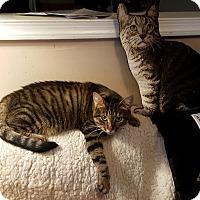 Adopt A Pet :: Charlotte - Fairfax, VA