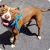 Adopt A Pet :: REX - Kimberton, PA