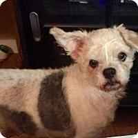 Adopt A Pet :: Lula Mae Camo in CT - Providence, RI