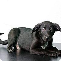 Adopt A Pet :: Coal - Savannah, GA