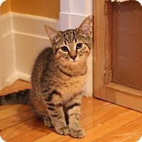 Adopt A Pet :: Kinder - Verdun, QC