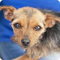 Adopt A Pet :: Libby - San Diego, CA