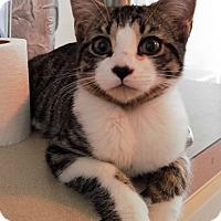Adopt A Pet :: Pierce - Tampa, FL