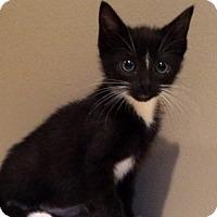 Adopt A Pet :: Lucy - Mayflower, AR