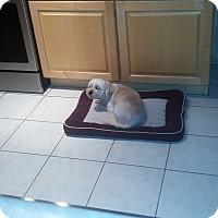 Adopt A Pet :: Fritz - Mesa, AZ