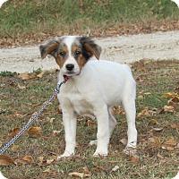 Adopt A Pet :: BLAISE - Hartford, CT