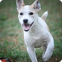 Adopt A Pet :: Inga - Westerly, RI