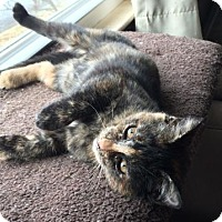 Adopt A Pet :: Hermoine - Wilmore, KY