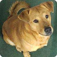 Adopt A Pet :: Sandy - Eden, NC