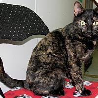 Adopt A Pet :: Candy Cane - New Kensington, PA