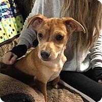 Adopt A Pet :: Tarzan - York, SC
