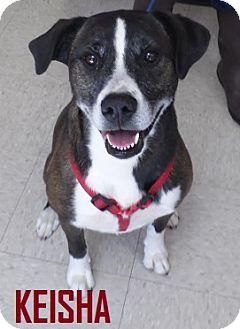 Border Collie/Husky Mix Dog for adoption in Franklin, North Carolina - KEISHA