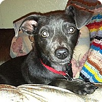 Adopt A Pet :: Kent - Phoenix, AZ