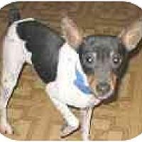 Adopt A Pet :: Nacho Bud - Topeka, KS