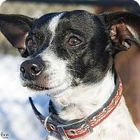 Adopt A Pet :: Nice Nelson - Brooklyn, NY