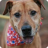Adopt A Pet :: Venus - Canoga Park, CA